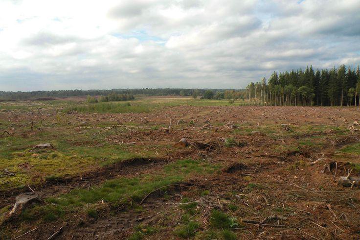 Naturen runt Stoby - vackert och fult - skogsavverkning