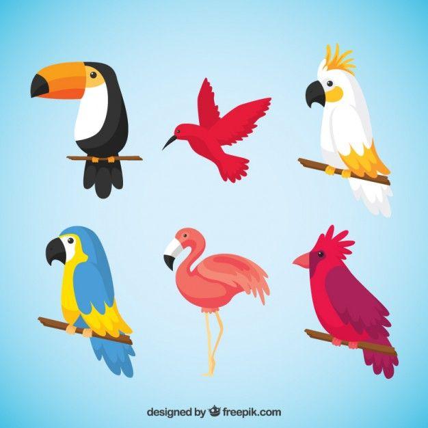 Pack de aves tropicales Vector Gratis