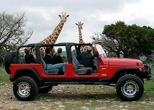 O       O #jeep #stretched   Safari Stretched Jeep