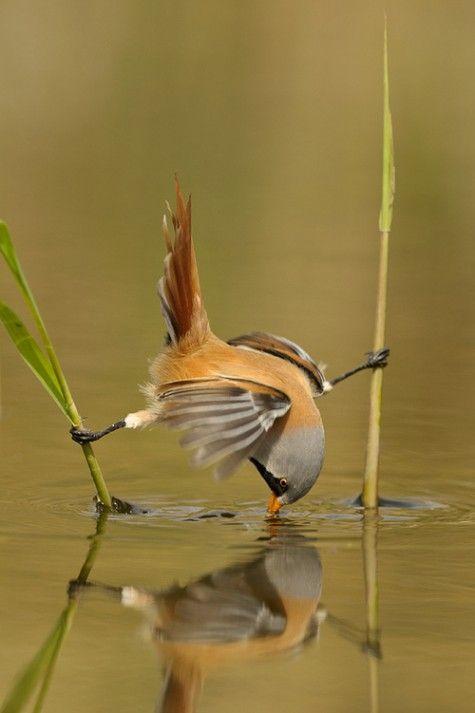 Ninja bird :O