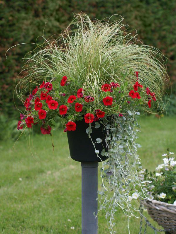 Раскрашиваем жизнь яркими цветами: создаем декор с помощью горшечных растений - Ярмарка Мастеров - ручная работа, handmade