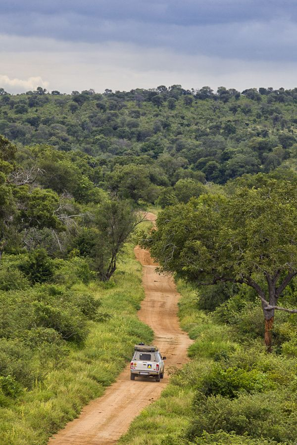 Animals - wildlife - safari - Africa - Exploring Kruger