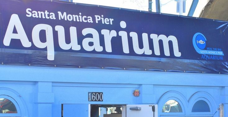 Santa Monica Pier Aquarium. Read more about things to do in Santa Monica here: http://www.welikela.com/things-to-do-santa-monica/