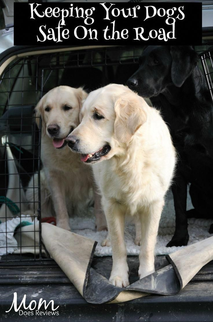 Keeping Your Dog Safe On The Road Dogs Pets Safety With Images Dog Safe Dogs Your Dog