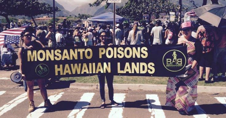 Hawai`i: Monsanto and Dow Chemicals' Genetically Engineered (GE) Crops Banned in Maui