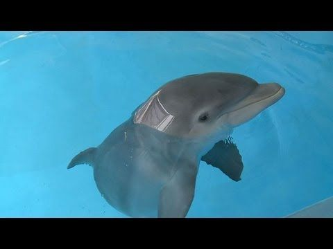 Baby Dolphin Meets Family Who Rescued Him - YouTube
