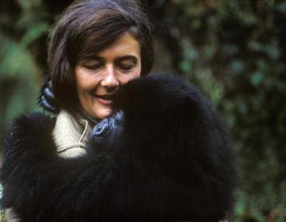 Siempre te recordare querida Dian Fosey !!!    Hoy se cumplen 27 años del asesinato de #DianFossey a manos de los #cazadores #furtivos de #gorilas.     Pasó 22 años estudiando el comportamiento de los gorilas en su hábitat natural, se enfrentó y combatió a los cazadores furtivos.    Dio literalmente su vida por proteger a los gorilas y su habitat.