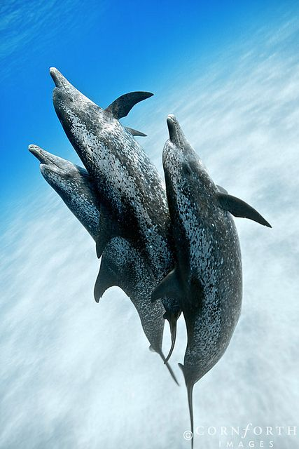 17+ best images about Dolphins on Pinterest | Swim, Eyes ...
