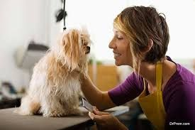 Who Else Wants to Discover How to Stop Their Dog's Behavior Problems For GOOD! Who Else Wants to Discover How to Stop Their Dog's Behavior Problems For GOOD! And Obedience Train Their Dog Using the Fastest and Most Reliable Methods Available TODAY? ( dog training). dogs .dog training guide.   http://dogtrainingtutor1.blogspot.com/