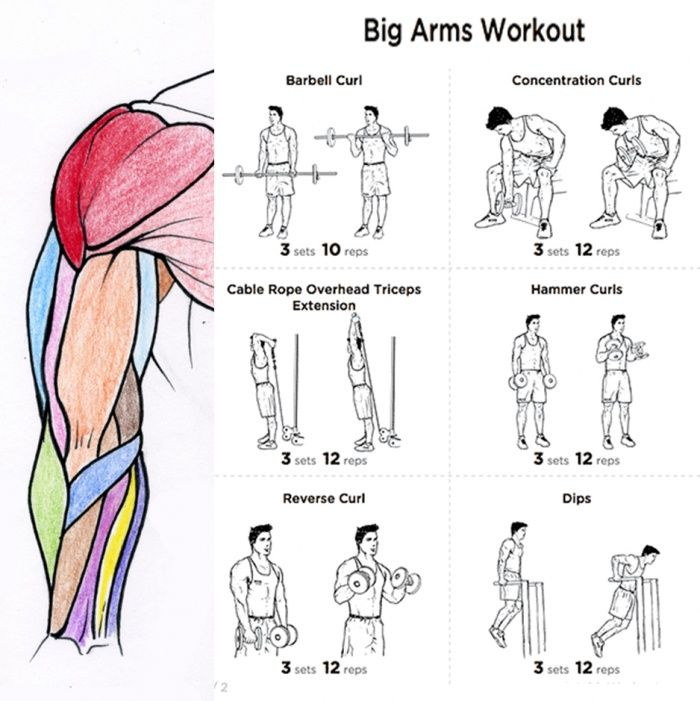 Big Arms Workout Plan - Fitness Health Routine Bicep Tricep Core