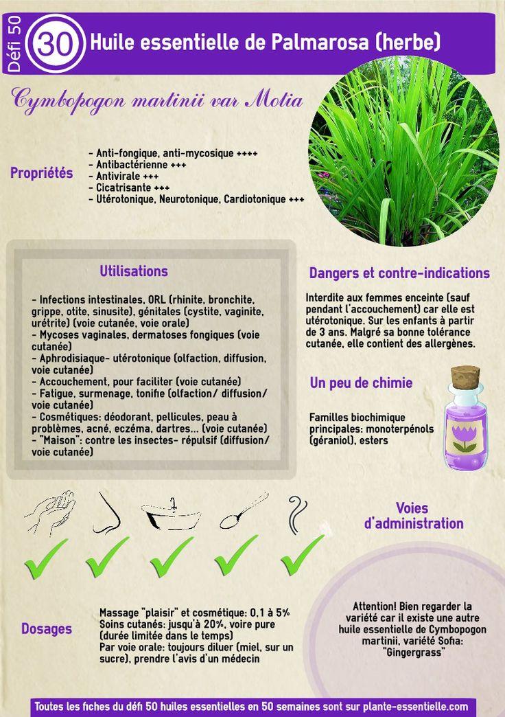 Aromathérapie | Plante Essentielle