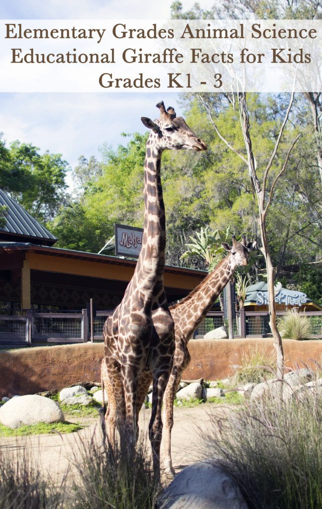 What Do Giraffes Eat? | Sciencing