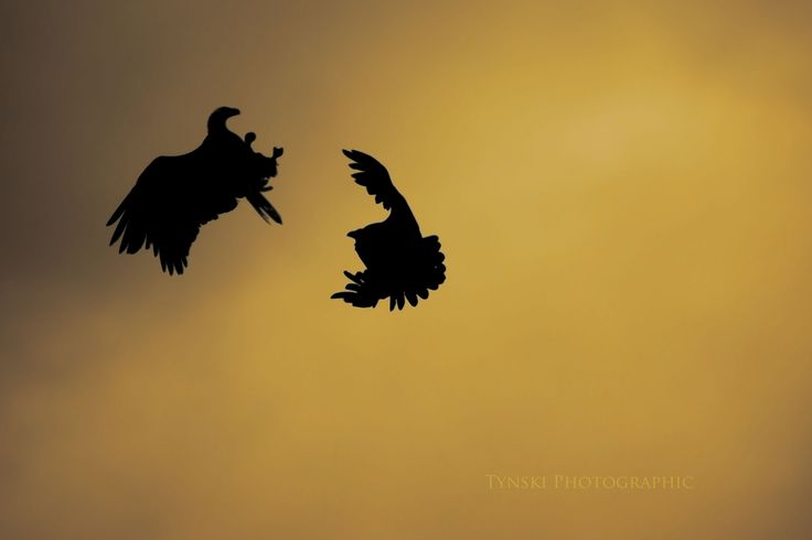 Conflict in Sillouette