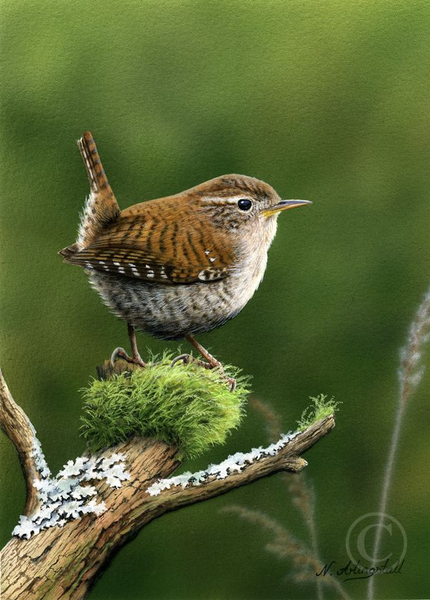 This is a little Carolina WrenI When I was young we use to call them Jenny Wrens! I have one that comes to my birdhouses & nest! God Bless it! I love their happy song! (: