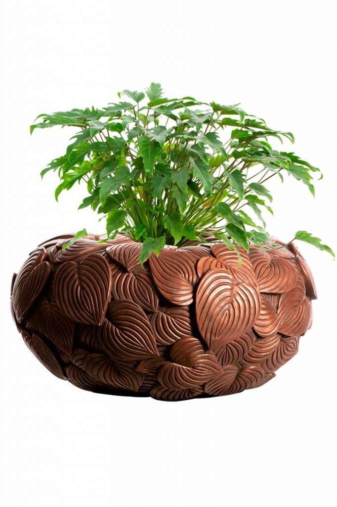 Planters for life Bowl Leaf Brass - Philodendron Xanadu