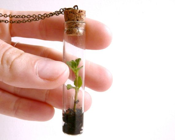 cool terrarium necklace...pinned by ♥ wootandhammy.com, thoughtful jewelry.