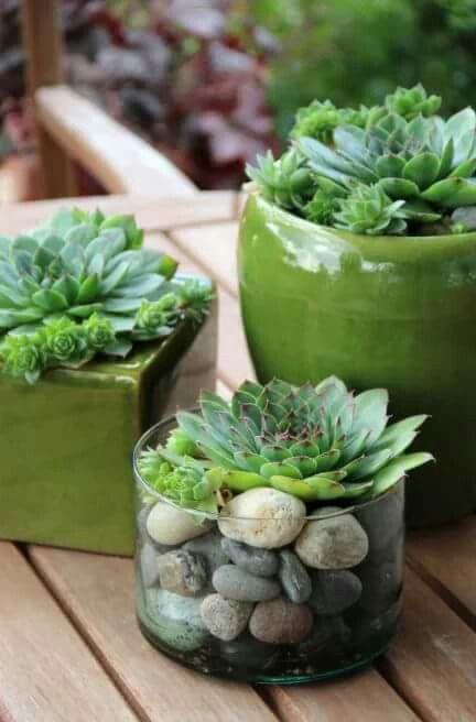 62 best dianthus sweet william images on pinterest for Indoor gardening diana yakeley