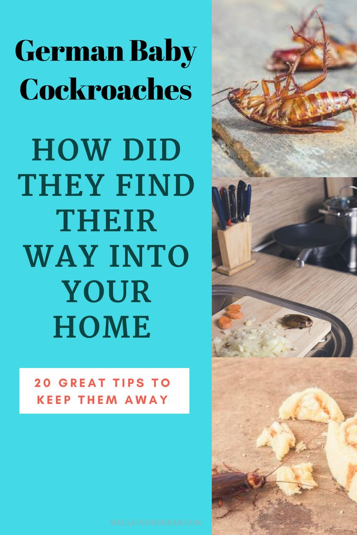 10 Unfailing Natural Ways to Get Rid of German Roaches (Baby ...