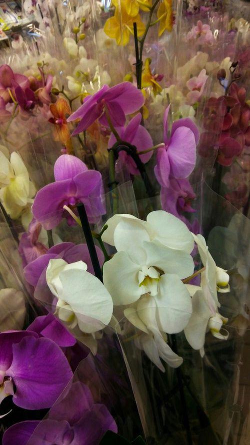 Imagem de colorful, orchids, and flowers