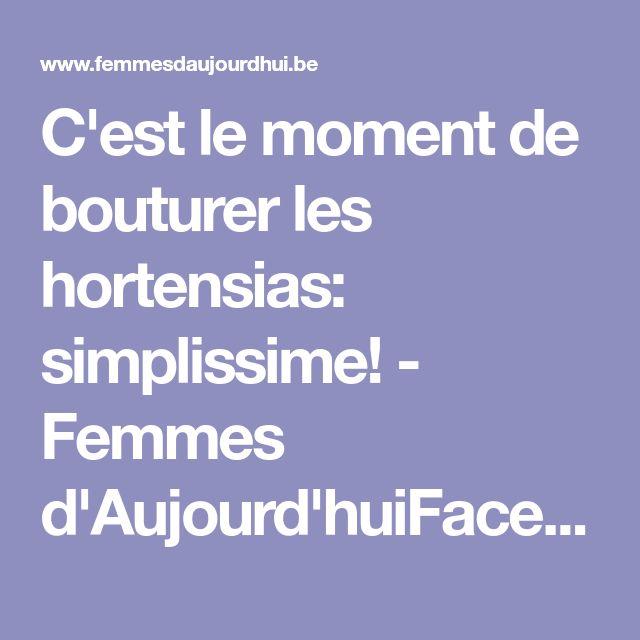 C'est le moment de bouturer les hortensias: simplissime! - Femmes d'Aujourd'huiFacebookPinterestWhatsAppEmail
