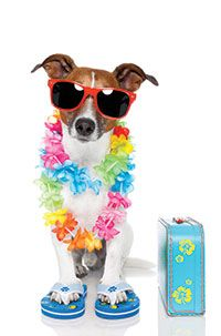 Dog Days of Summer Sunset Party: 5:30-9:30 p.m. Aug. 17 at Bluffton Oyster Factory Park. This party will include music, food, and beer for party-goers to enjoy. The celebration will benefit Palmetto Animal League, a no-kill animal rescue and adoption organization serving animals in the Lowcountry. Cost is $5.
