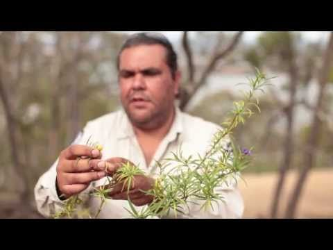 ▶ Stories from Ngunnawal Country - Black Mt - Bush resources - YouTube