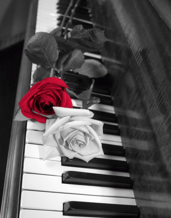 Black White Red Rose On Piano Wall Art Photography Home Decor Matted Picture on Etsy, $21.13 AUD