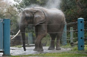 Please vote to send Woodland Park Zoo's two remaining elephants to sanctuary! Please vote today!