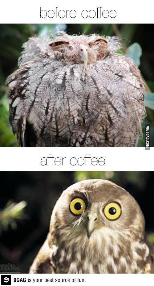 the magic of coffee