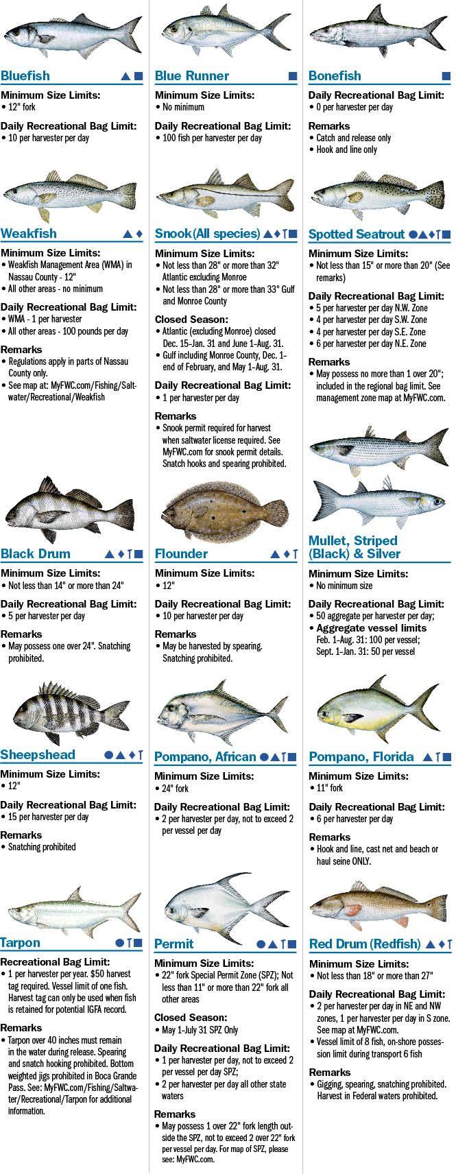 Freshwater fish nc - Coastal Species Florida Saltwater Fishing Regulations Eregulations Com