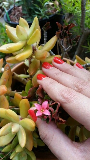 # gelnails # succulents #orange