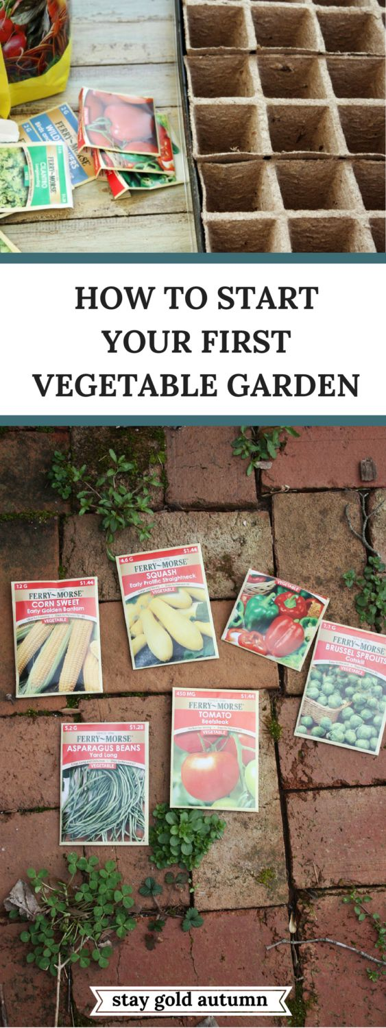 How to start your first vegetable garden: easy step by step instructions with pi…