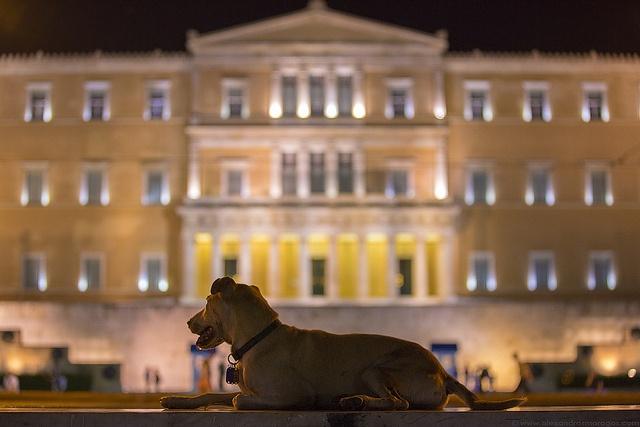Loukanikos (Sausage) The Riot Dog by Alexandros Maragos, via Flickr