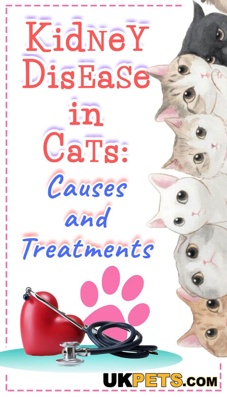 Kidney Disease in Cats Causes and Treatments Kidney