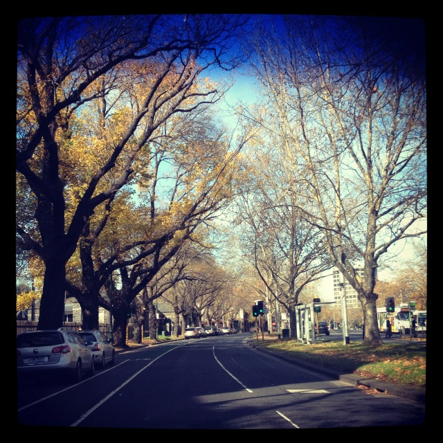 Melbourne - the city is even pretty in autumn and winter when the trees are bare.
