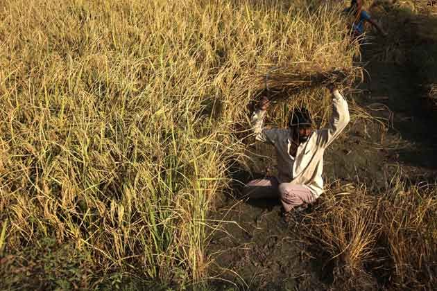 #Kerala #tackles #rising #rice #prices amid Oppn fire
