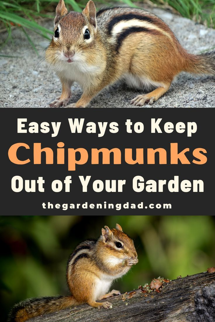 Pin On Gardening Tips And Projects