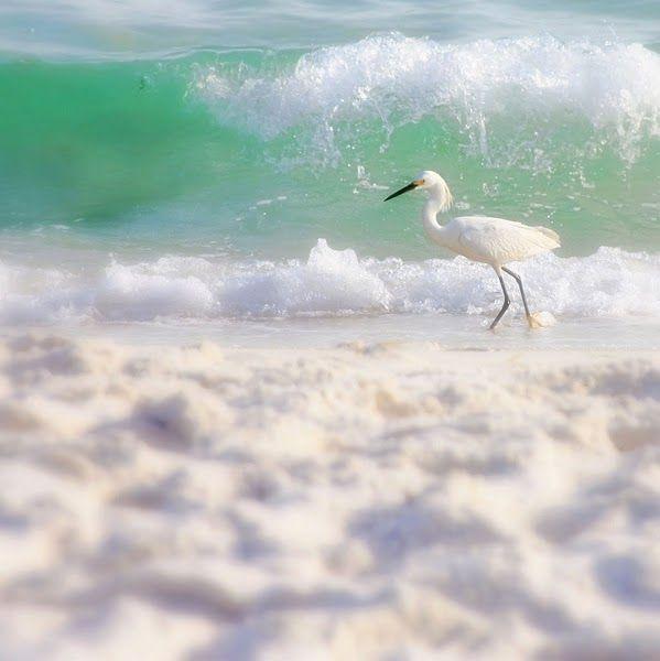 White Egret: At The Beaches, The Ocean, Pretty Colors, Colors Palettes, White Beaches, The Waves, Florida Beaches, Sea Birds, Earth Mothers
