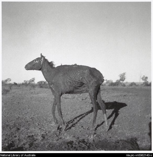 Nolan, Sidney, Sir, 1917-1992. A dried horse carcass, Queensland, 1952 [picture]