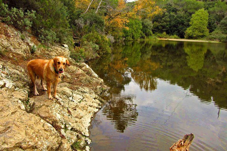 Escapadas a lugares 'perro perfectos' en plena naturaleza en Barcelona