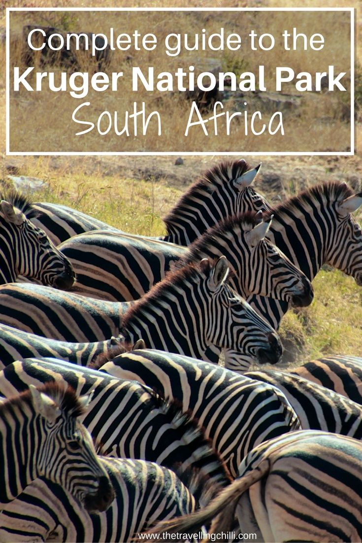 Complete guide to a self drive safari in the Kruger National Park in South Africa