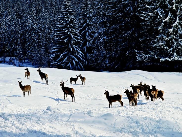 Parco di Paneveggio - Trentino  http://www.visittrentino.it/it/cosa_fare/da_vedere/dettagli/dett/parco-naturale-paneveggio-pale-di-san-martino