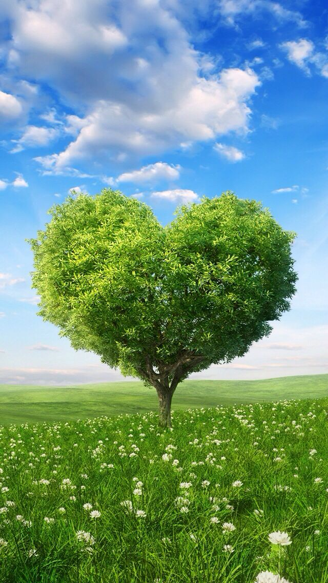 Love Tree Wallpapers : Heart Shaped tree spring iPhone wallpapers Pinterest Trees, Spring and Heart