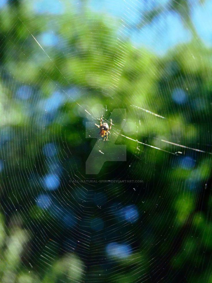 Spiderweb and Spider by All-Natural-Spirit.deviantart.com on @DeviantArt