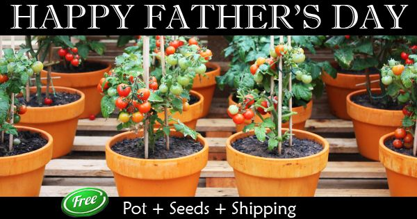 Nurserylive is giving away 100 Garden kits to dads all over India on this #FathersDay. The Kit contains 2 pots + 3 seeds + Soil + Free Shipping