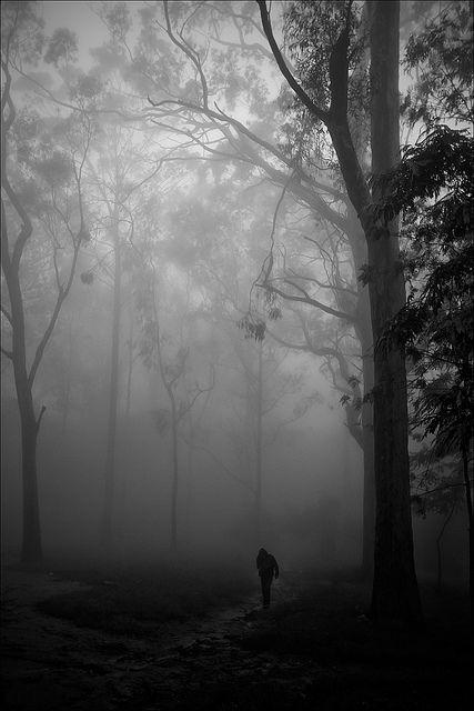 a walk in the woods, Nandi Hills