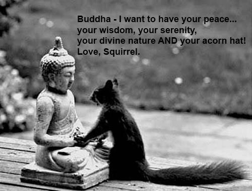 Buddha - I want to have your peace, your wisdom, your serenity, your divine nature AND your acorn hat!   Love, Squirrel #Squirrel #Buddha: Prayer, Squirrels, Acorn Hats, Funny, Nut, Inner Peace, Smile, Buddha, Animal