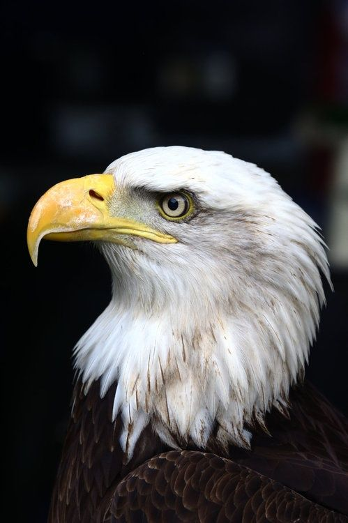 The eagle has always been symbolic of strength, courage, farsightedness, and immortality. Find eagle wax seal jewelry at Shannon Westmeyer Jewelry: https://shannonwestmeyer.com/collections/wisdom-guidance