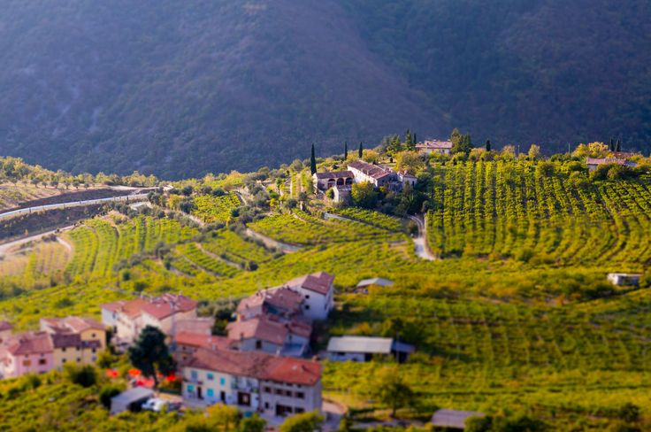 Where Amarone wine comes from:  the hills of the Valpolicella region. Article on why Amarone wine is so expensive...