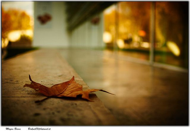 simplicity: Leaves, Photos Shared